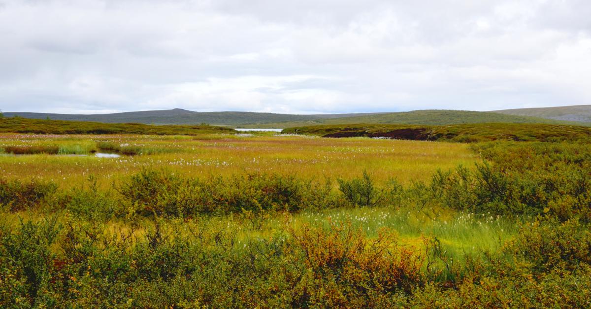 arktinen suo ruotsi