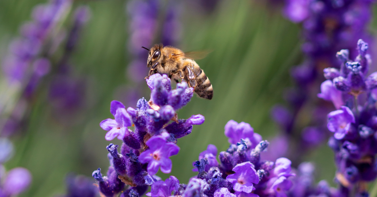 Biodiversity, honey bee. Nature-based solutions NbS